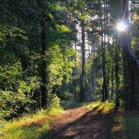 Под росность солнечных теней... :: Лесо-Вед (Баранов)