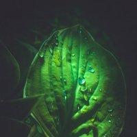после дождя :: Юра Викулин