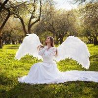 Ангел :: Николай Орехов