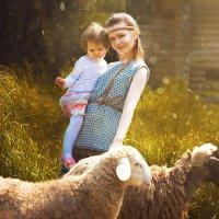 С овечками :: Tatiana