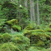 Карельские леса :: Николай Танаев