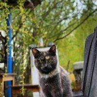 Кошка :: Юлия Морец