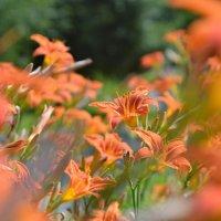 Оранжевое настроение :: John Smith