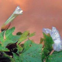 Пепел розы :: Фотогруппа Весна-Вера,Саша,Натан