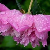 После дождя... :: Елена Митряйкина