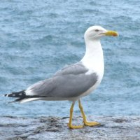 Чайка :: Юлия Филиппова