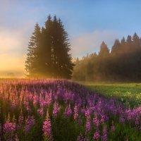 Мечта художника, или цветущие луга :: Фёдор. Лашков