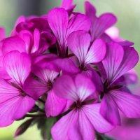 Только цветы напоминают , что ещё лето. :: Игорь Чичиль