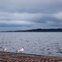 Набережная Онежского озера, Петрозаводск :: Avada Kedavra!