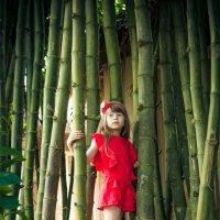 Bamboo :: Victoria Bryfar