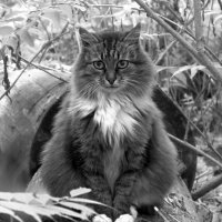 the Cat ) :: Марина Буренкова
