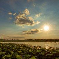 Закат на озере лотосов :: Андрей Володин