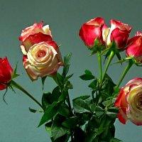 Семь роз :: Сергей Карачин
