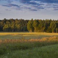 Утро на опушке леса :: Виталий Латышонок
