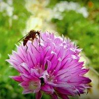 В моём саду! :: Владимир Шошин