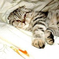 Лежу себе на своей кровати :: Натали Пам