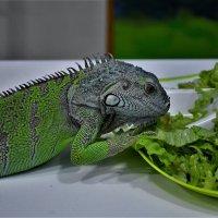Пришла обедать... :: Клара