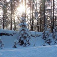 Луч солнца зимой :: Андрей .