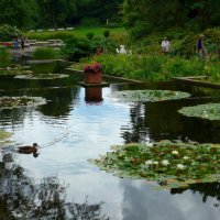 В парке цветов :: Nina Yudicheva