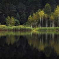 Отражения :: Сергей Шабуневич