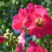 Цветы нам дарят настроенье и пробуждают вдохновенье :: Татьяна Смоляниченко