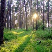 Закат в лесу :: Елена Шемякина
