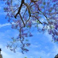 Окно в небо :: Николай Танаев