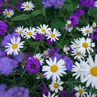 Плывет глубокий аромат цветочный..... :: Galina Dzubina