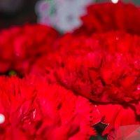 мои любимые цветы :: Наталья (ShadeNataly) Мельник
