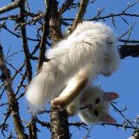 Котёнок Тима :: Елена Грошева
