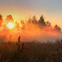 Доброе утро СВЕТИЛО! :: Павлова Татьяна Павлова