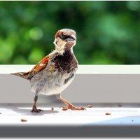 ждали? :: linnud