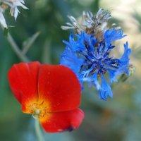 Red&Blue :: Олег Шендерюк