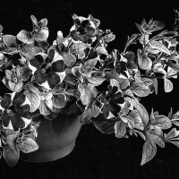 Цветение :: Людвикас Масюлис