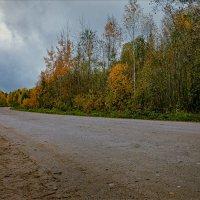 Насыпная дорога через болото... :: Александр Никитинский