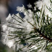цветы Мороза 3 :: Александр Прокудин