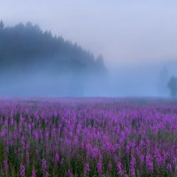 Разлилось море цветов :: Фёдор. Лашков