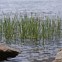 На берегу реки :: Любовь Чунарёва