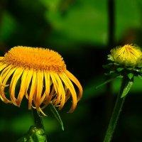 Такие разные цветы :: Милешкин Владимир Алексеевич