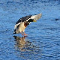 посадка :: linnud