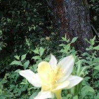 Бело-жёлтый цветок :: Дмитрий Никитин