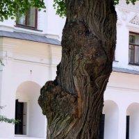 Вот такое дерево :: Наталья Джикидзе (Берёзина)