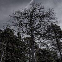 Тёмный лес :: Павел Харлин