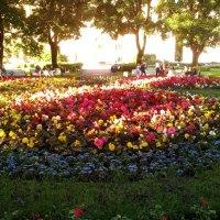 Прекрасные цветы клумбы, которая находиться недалеко от Троицкого моста. :: Светлана Калмыкова