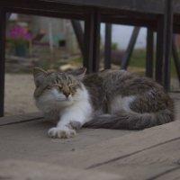 Без кота и жизнь не та :: Евгений Князев