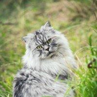 Кошачьи каникулы :: Александр Долгов