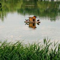 на городском пруду :: elena manas
