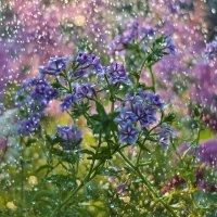 Летний дождь :: Сергей Басов