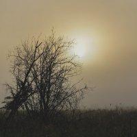 Утро туманное! :: Ирина Антоновна