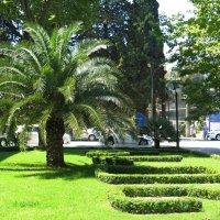 Красавица пальма :: Татьяна Смоляниченко